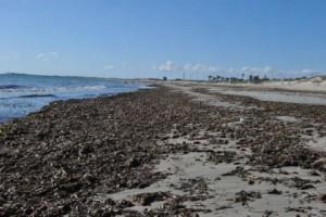21552_posidonia-seagrass-meadows-are-shrinking-off-the-coast-of-murcia_2_large