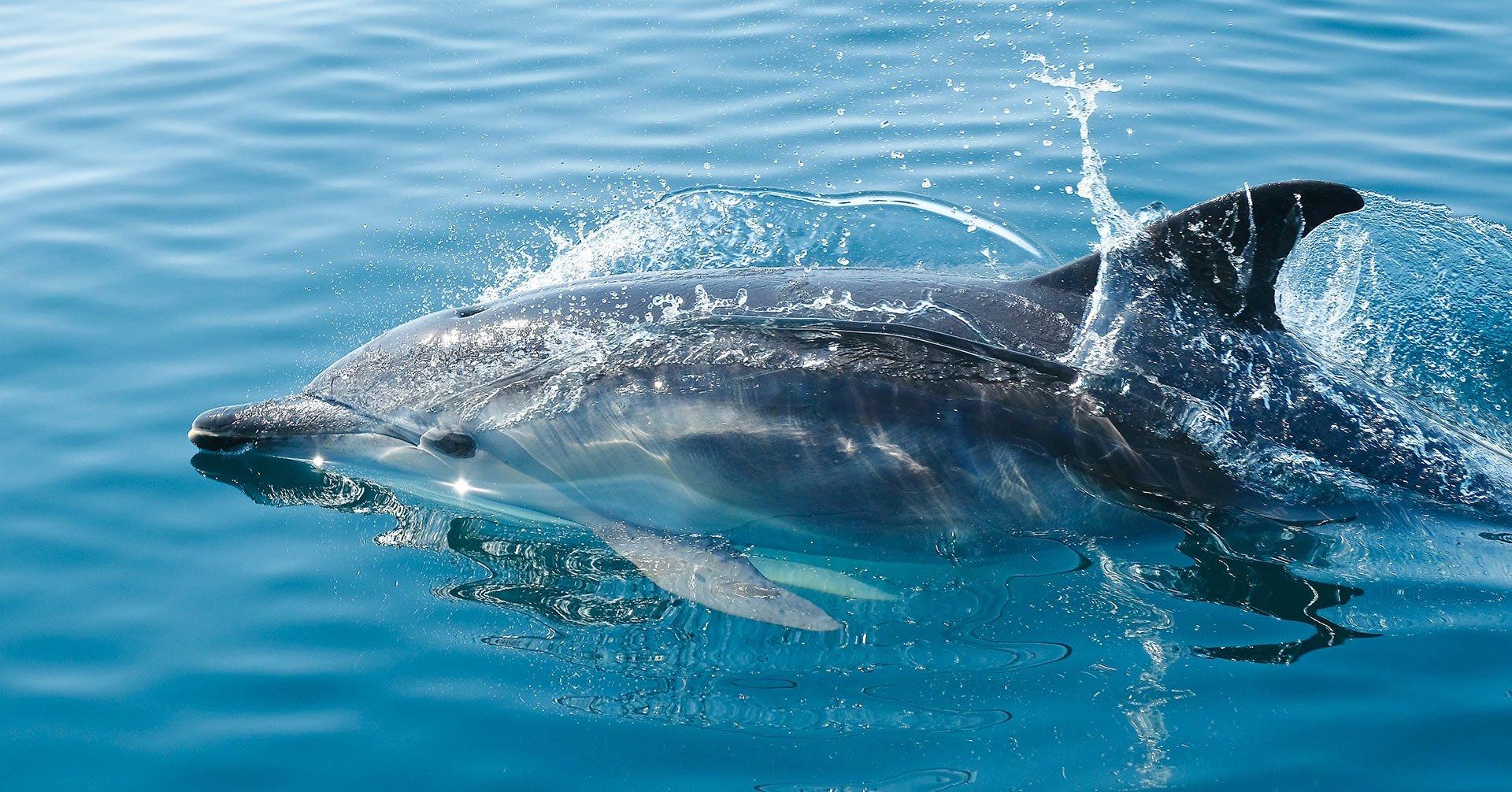delfinbeobachtungstour auf Mallorca