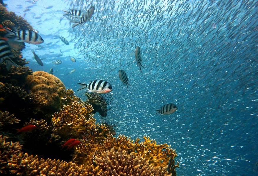 diving on Mallorca